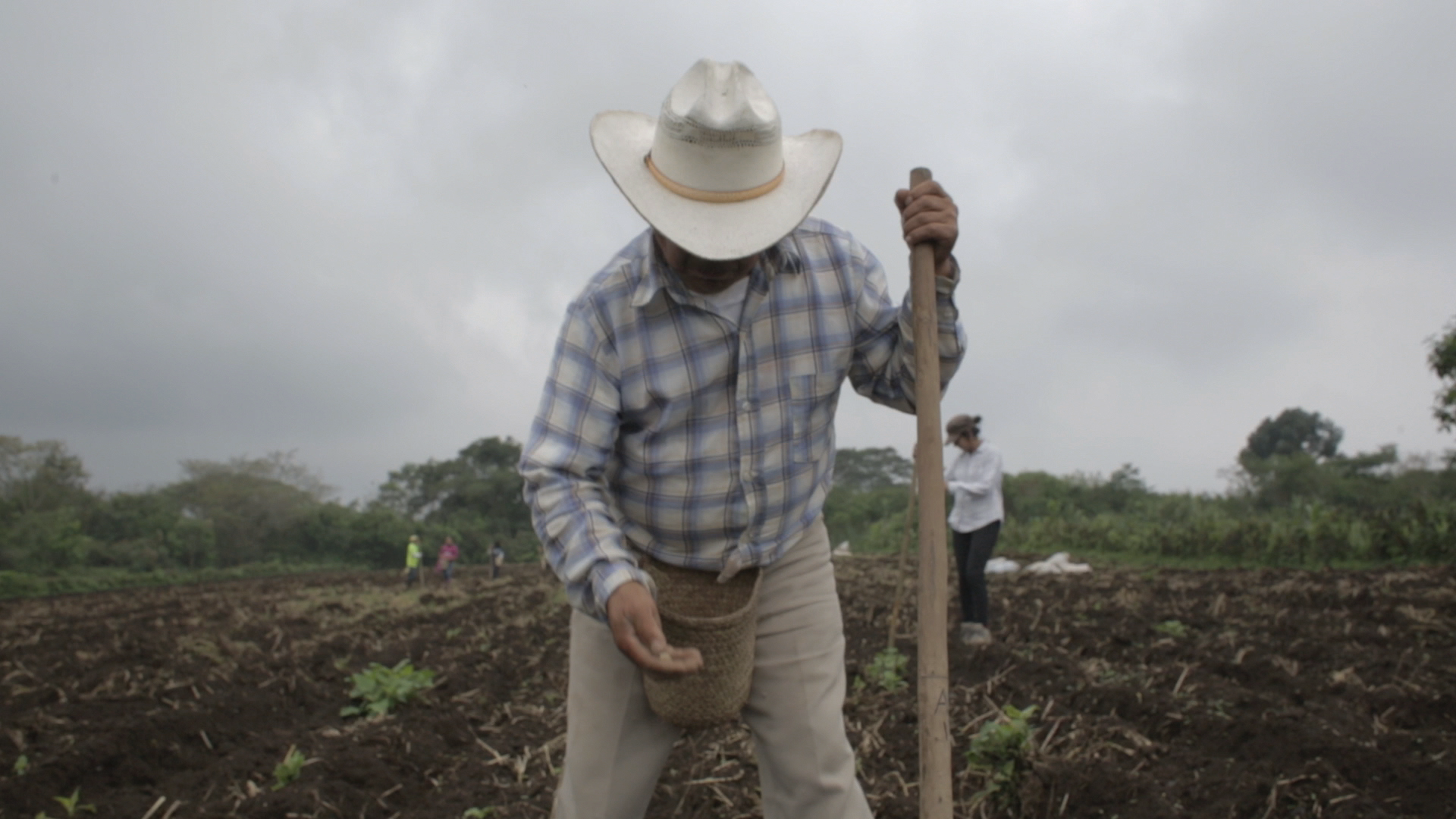 a man wearing a checkered shirt, beige trousers, and a white hat holding a large staff and sowing seeds by hand