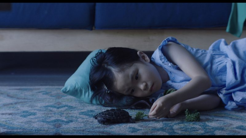 A young girl lying on a carpeted floor, feeding some lettuce to a small turtle.