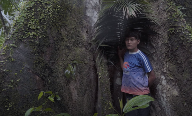 """A still from """"The Return"""". Beneath the shade of a large palm frond, a child stands with one hand against the leaf and another behind his back, gazing out of frame. The frond grows from the broad trunk of a tree behind him. Its bark is grey-brown and dotted with ferns and moss."""
